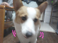 ichigo2